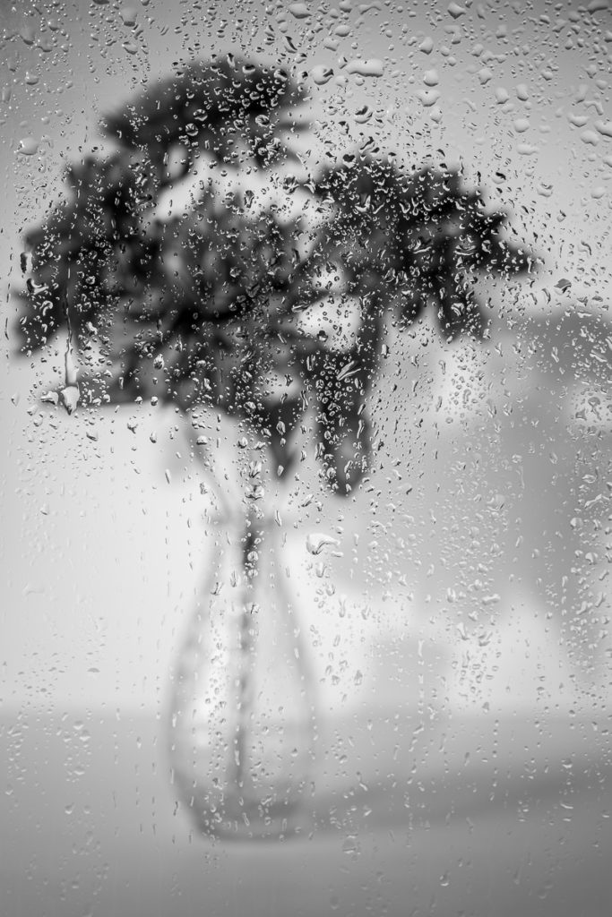 Black and white photography of a vase with flowers on a rainy day